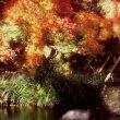 『紅葉の想い出』 長谷寺