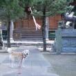 愛犬まるの月命日1+6