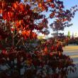 日記(10.23)散歩「木々」
