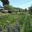 ぶらり散策~錦帯橋と梅雨の花 その2