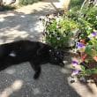黒猫ジジィの昼下がり