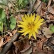北本自然観察公園周辺の春花