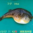 笑転爺の釣行記 2月17日☀ 浦賀港岸壁