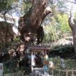 来宮神社参拝・大楠~丹那トンネル殉職者慰霊碑~熱海梅園見物(友人投稿)