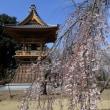 慈眼寺のしだれ桜2019(その7)