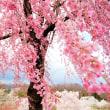 桜sakura。