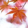 秋いろものがたり