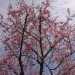 春を楽しみて