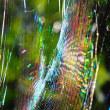 自然からの贈りもの虹色に輝くクモの糸
