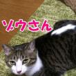 我が家の猫こむぎ&だいずはXジャパンの隠れファン【猫日記こむぎ&だいず】2017 12 11