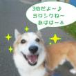 2018 9/19★今日はたろう君・ランちゃん・サクラちゃん・ゆきちゃん・ライム君です★