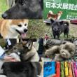 [日本犬展覧会]