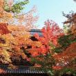 紅葉狩りin永源寺