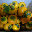 今年の柿は、豊作?