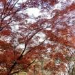 山の麓の紅葉