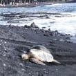 溶岩大地の島ハワイ島へ