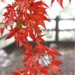 雨の紅葉観賞