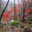 福島・滝川渓谷の秋