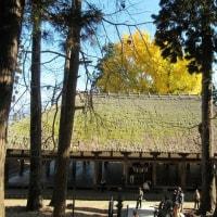 「新宮熊野神社 長床」と大銀杏