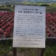北海道旅行-3