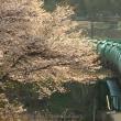 2017-04-21_桜前線、北上中。