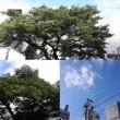 10月13日(土)今日の北川桜