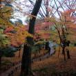 11月20日、兼六園の紅葉。