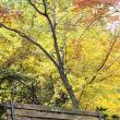 去りゆく秋(環境芸術の森)‥④ 【ひで某】