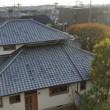 3週間半ぶりに屋根が出来ました。