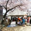 緑 桜まつり