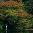 秋バラ~神代植物公園