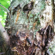 養老の森で昆虫観察会