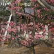 梅の香りが漂う境内。真言宗智山派総本山「智積院」の夕暮れ