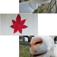 """""""wondermilk FALO""""&""""もみじ""""さんへ"""