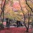 錦秋の京都~圓光寺~