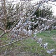 あちこちに春