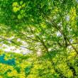 木々の緑は見納め