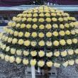 弥彦神社を訪れる