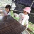 農業実践教室第23期:1回目~人参発芽&小さい農業女子、今年も来たる!