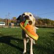 りんごと犬のブログ。