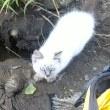 砂取の子猫