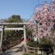 碑文谷公園の桜 2018