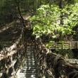 奥祖谷かずら橋