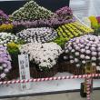 楽しい園芸 菊花薫る季節