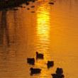 180122 熊本水前寺、江津湖6時、霧、幽玄の世界!黄金の朝日ならず!