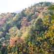 秋色の大札山(奥大井)へ
