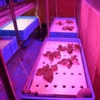 室内水耕栽培61 (H31.2.1~)