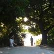 石垣島・八重山島めぐり
