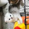 バッグンに可愛くなった子猫ちゃん😻