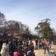 本日の千葉城さくら祭りでの大道芸は中止です